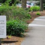 Apothecary Garden