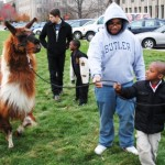 "Butler students Greg Zemtsov, left rear , and Marcus Harvey help introduce their ""little buddies"" to a llama, during a fall College Mentors for Kids session."